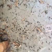 Mouse Droppings Found During Inspection