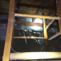 Spider Webs In Our Basement & Garage