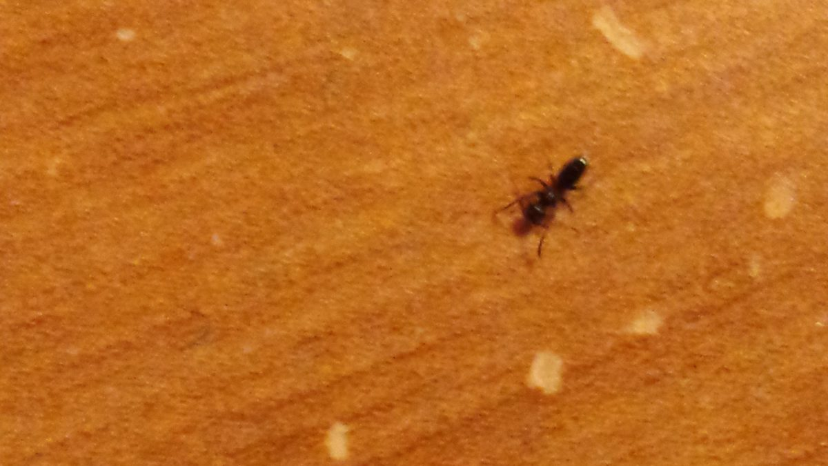 Carpenter Ants In My Bathroom!!
